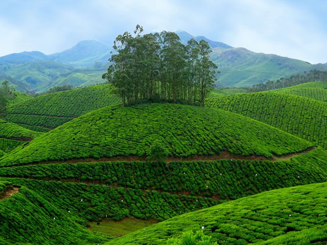 Top 10 Hill Stations In Kerala Kerala Backwaters Blog