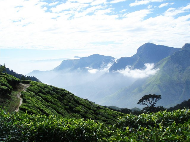 Highest Point in Munnar: Top Station