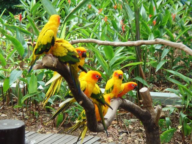 Kumarakom Bird Sanctuary: things to do in kumarakom
