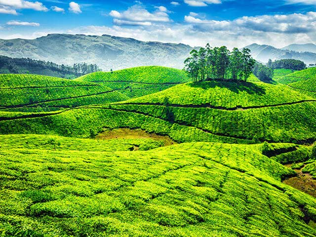 Munnar: best places to visit in kerala during winer