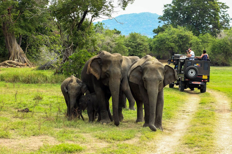 Top 10 Tourist Attractions in Kerala that are simply the real deal