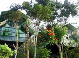 Tree Houses in Wayanad