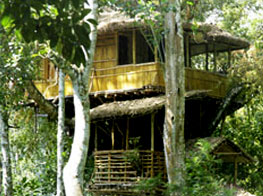 The Shola Periyar Tree House