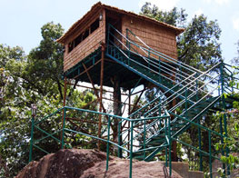 Tree Houses in Misty Munnar