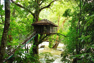 Idukki Tree House