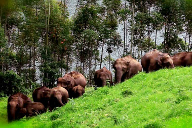 Idukki Wildlife