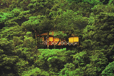 Tree Houses Wayanad